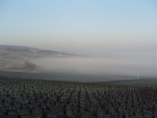 Champagne L. Albert Guichon - Viticulteur à Mardeuil, sur les coteaux d'Epernay