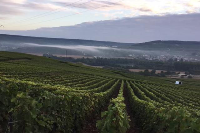 vignoble de Champagne Maison Albert-Guichon